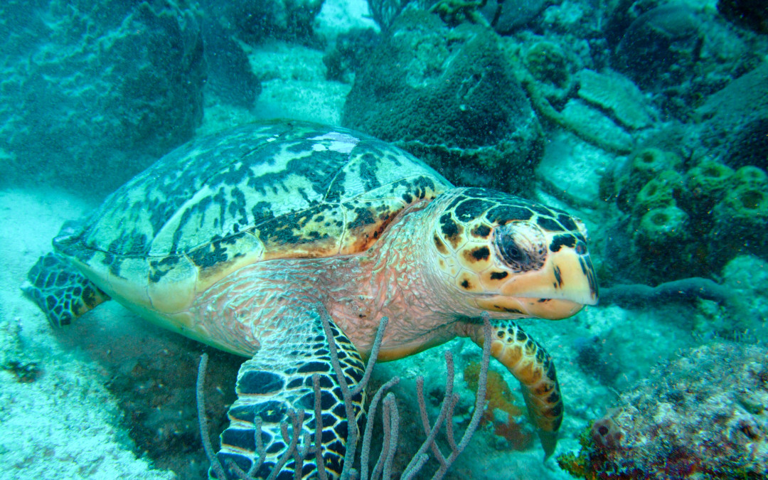 Turtles – stories and myths I